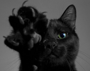 black cat with claws